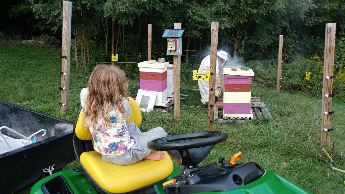 Life Lessons from Beekeeping